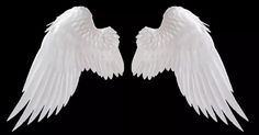Beautiful wings! I'd love to have them...for real!!