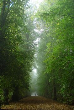 Autumn trees in the mist, Shotover Estate, Oxfordshire, England