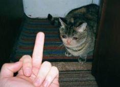 Memes sad de gatos 32 ideas for 2019 Sad Cat Meme, Cute Cat Memes, Funny Animal Memes, Funny Cats, Funny Animals, Cute Animals, Funny Memes, Kitten Accessories, Ugly Cat