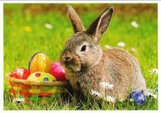 Bijna Pasen! Maak zelf officiële chocolade paaseieren!