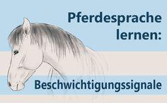 Wenn Dein Pferd Dich als aggressiv empfindet, zeigt es das mit Beschwichtigungssignalen. Welche das sind und was Du dann tun kannst erfährst Du im Artikel!