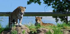 Chester Zoo features as a top UK attraction on the My Time Rewards blog http://www.mytimerewardsblog.co.uk/2014/05/the-10-most-popular-uk-attractions/