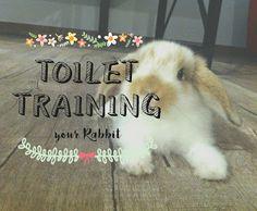 How to toilet train/ potty train your rabbit