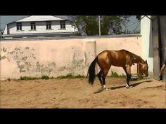 ▶ Akhal-teke colt Diger, 2010 - YouTube