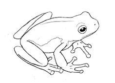 """Résultat de recherche d'images pour """"frog drawing"""""""