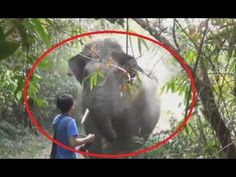 Incredible Moment Man Stops Charging Elephant| FULL VIDEO - YouTube