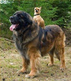 dog ride