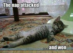 The.....Nap!!!