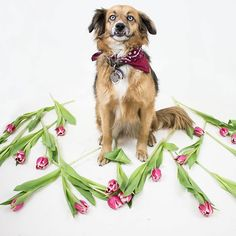 KISURA INSIDE // All you need is love and your dog <3 Unsere Mila @kisura_official #startup in #valentinesprep #dog #flowers #KISURA #personalstylist #allyouneedis #love #AboutKISURA