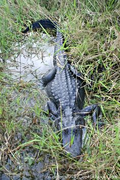 Everglades National Park - Great information about the stops and trails in the Everglades National Park