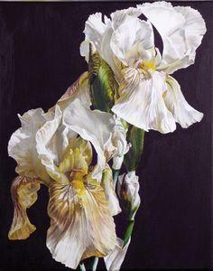 Cafe Creme Irises © Sarah Caswell SBA