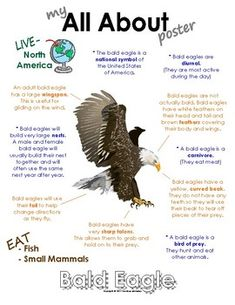 My All About Bald Eagle Book / Workbook - North American Animal Fun Facts About Animals, Animal Facts, Animal Fun, Eagle Facts, Visual Schedule Autism, Eagle Craft, Art Books For Kids, North American Animals, Science Stations