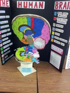 brain model project ideas - Bing Images