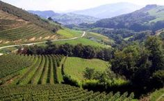 Northern Spain Wine Country