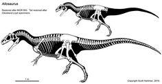 Squelette d'Allosaurus, selon Scott Hartman