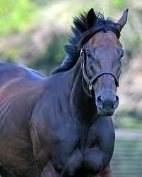 Piccadilly Circus: dam of Fastnet Rock