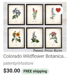 Colorado Wildflowers, Patent Prints, Print Store, Office Decor, Frame, Inspiration, Home Decor, Picture Frame, Biblical Inspiration
