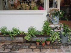 Masaki& diary May 2014 Plant Cuttings, Flowering Trees, Cut Flowers, Dream Garden, Hana, Respect, Green, Plants, Gardening