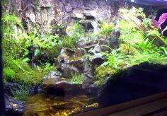 natural vivarium waterfall - Google Search