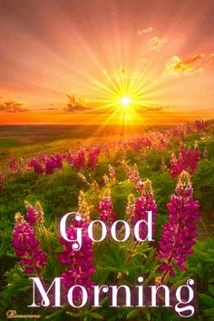 Good Morning Sunrise, Good Morning Happy Monday, Good Morning Nature, Good Morning Friends, Happy Thursday, Good Morning Gif Images, Good Morning Beautiful Pictures, Good Morning Images Flowers, Morning Pictures