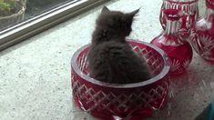 favoriete plek Cattery, Cats, Animals, Gatos, Animaux, Animales, Cat, Kitty, Animal