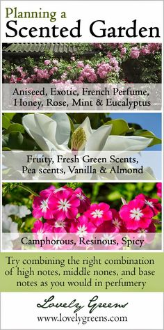 The 15 Categories of Scented Flowers and Plants a Scented Plants Book Giveaway ~ Lovely Greens ~ - Gardening Pacer Garden Shrubs, Garden Plants, Garden Landscaping, Flowering Plants, Nature Plants, Herb Garden, Landscaping Ideas, Organic Gardening, Gardening Tips