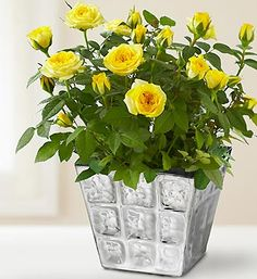 A potted plant as a centerpiece?  That's pretty cool.  Then people could take it with them.