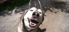 I want to be as happy as this dog getting his head massaged