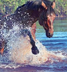 Here are 31 fun and useful things to do with your horse - other than riding (includes bonding activities)