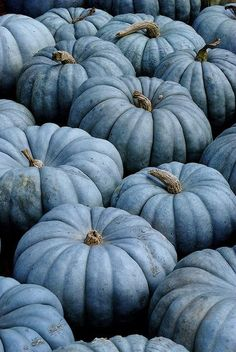Blue pumpkins awh theyre my favorite color now 😁 Autumn Aesthetic, Blue Aesthetic, Wedding Reception Ideas, Chinoiserie Chic, Soft Summer, Samhain, Fall Pumpkins, Autumn Inspiration, Style Inspiration