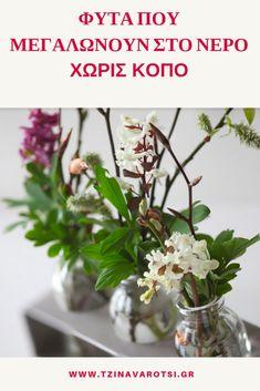 Φυτά που Μεγαλώνουν σε Νερό Χωρίς Κόπο - Collect Ideas - Get Inspired Decoration, Glass Vase, Succulents, Home And Garden, Backyard, Plants, Gardening, Home Decor, Flower