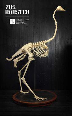 Old Ostrich Skeleton from Dutch Museum Funny Animal Faces, Funny Animals, Camelus, Animal Skeletons, Flightless Bird, Animal Anatomy, Anatomy Drawing, African Animals, Skull And Bones