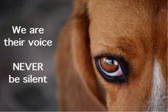 #China the wrld is watching you, stop the torture of defenceless animals. We'll never be silent #StopYulin2015 pic.twitter.com/WBtdlHdpR1