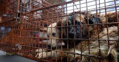 Impartir clases de civismo y ética obligatorias es parte de la lucha contra el maltrato animal...
