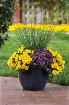 Container Flowers Textured grasses paired with colorful, Cool Wave pansies can punch up your front porch containers in spring. Outdoor Flowers, Outdoor Planters, Garden Planters, Outdoor Gardens, Container Flowers, Flower Planters, Flower Pots, Full Sun Container Plants, Flower Ideas
