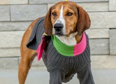 """Here's How You Can Help Keep A Shelter Pet Warm This Winter   Petcha.com   """"You know those old sweaters you haven't worn in years? Give them to a shelter dog this winter! Dogs need clothes this winter. You may think dressing up dogs in clothes isjust something silly, but you'd be wrong. Shelters all over the country would LOVE your old sweaters in order to keep rescue pups warm during the chilly days and nights."""" Click to read and share the full article."""
