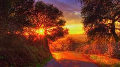 Heading back down to my favorite tree for the last light of the day. Funeral Hymns, Sunset Road, Forest Road, Sunset Wallpaper, Timeline Covers, Beautiful Sunset, Amazing Nature, Mother Nature, Paths