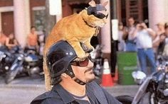 I have a scooter and training the cat lol