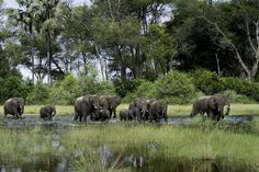 Botswana is a destination for adventure and relaxation.  It is said to be one of Africa's most desired places, Botswana holidays are bliss and serene.  If you choose to go on a Botswana safari you will get to experience many amazing animals and landscape.  Also, little be known, that Botswana family safaris are amazing for kids and adults alike.
