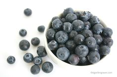 Sunlight on Blueberries! Blueberry recipes