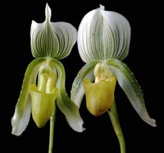 Tips For How To Make An Orchid Bloom - While easy to grow and care for, many people still wonder how to make an orchid bloom. After all, if an orchid won't flower, then it is missing the element that makes these plants so desirable. Click here for more info.
