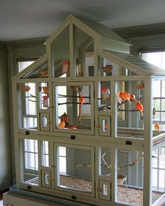 Indoor aviary with orange canaries.