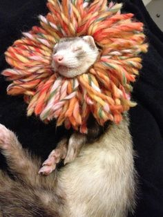 Lion Costume for Ferrets Guinea Pigs Cats or Any by DitsyKiwi