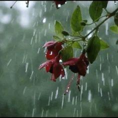 Animated gif about gif in 下雨天 Rainy Days by MirandaKeyes Beautiful Flowers Wallpapers, Beautiful Rose Flowers, Beautiful Gif, Rainy Day Photography, Rain Photography, Rainy Wallpaper, Gif Lindos, Rain Gif, Foto Gif