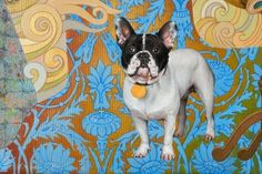Paintings | Elena Abessinova Boston Terrier, Paintings, Dogs, Animals, Animales, Paint, Animaux, Painting Art, Pet Dogs