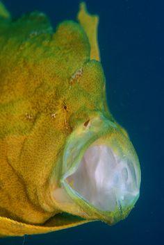 #marine #fish #yellow