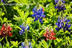 hot pink/red bluebonnets at New York Texas Zipline Adventures www.goziptexas.com
