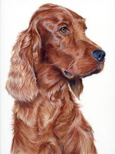 colored pencil drawing- look at that wonderful silky fur.  Beautiful drawing. Anyone know who the artist is?