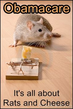 Rats and Cheese