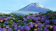 Mount Fuji, Japan -  富士山